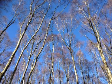 Words for the Wild – Poetry and short fiction rooted in our countryside